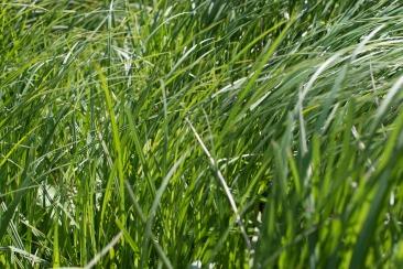 bushy_park_17-05-05_1500_44