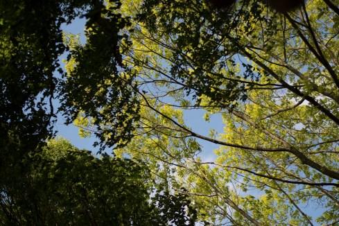 bushy_park_17-05-05_1500_65