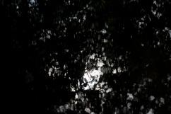 bushy_park_17_05_22_seq_3_028_1920