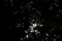 bushy_park_17_05_22_seq_3_037_1920