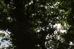 bushy_park_17_05_22_seq_5_037_1920