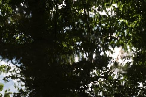 bushy_park_17_05_22_seq_5_045_1920