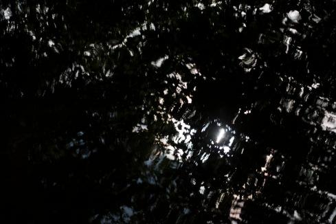 bushy_park_17_05_22_seq_6_000_1920