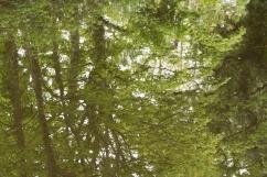 bushy_park_reflections_2_1500_14
